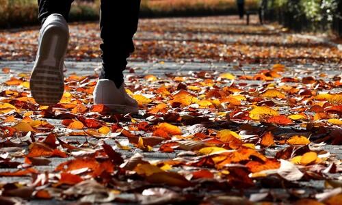 발끝으로 느끼는 가을
