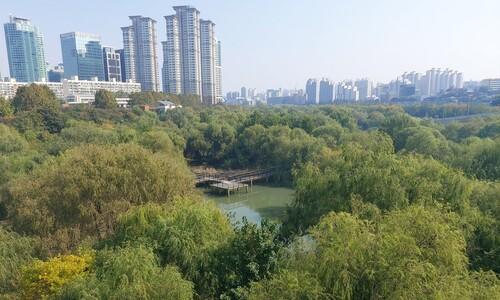빌딩숲 사이 보일듯말듯…서울이 숨겨놓은 '비밀의 숲'