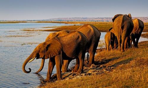 코끼리 하루 물 소모량은?