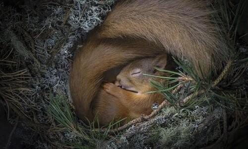 [애피] 꿈꾸는 다람쥐, '마당요정' 올빼미, 공처럼 언 토끼…