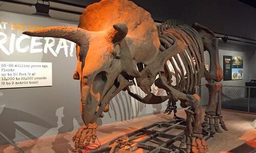 초식공룡, 씨 뿌리는 '농부'였다
