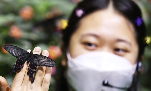 손 끝에 내려앉은 검은 나비