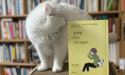 '무지개 다리'까지 편안히…시한부 14살 고양이 간병일기