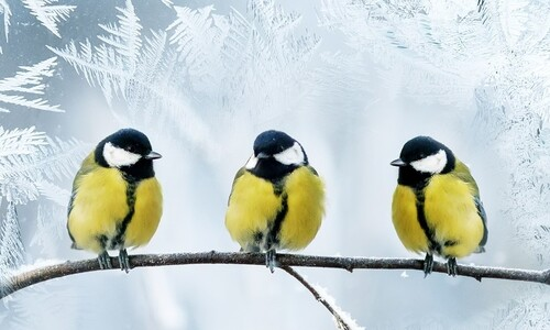작은 새는 '다운 패딩' 입고 추위 이긴다