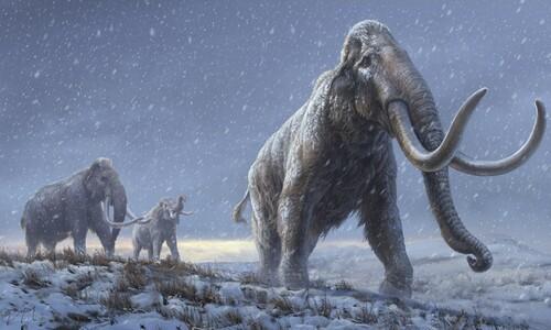 백만년 전 어금니 속 DNA로 '매머드 족보' 다시 썼다
