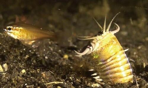 '길이 2미터' 거대 바다 벌레 포식자 흔적화석 발견