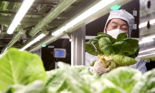 스마트팜 재배 작물 살펴보는 안철수