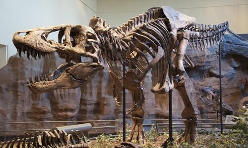 '티라노'의 고속성장이 낳은 공룡생태계 '거대하거나 작거나'