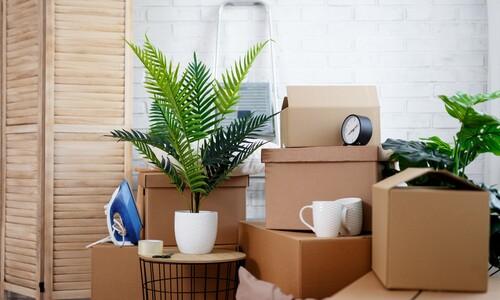식물과 함께 하는 새집 생활