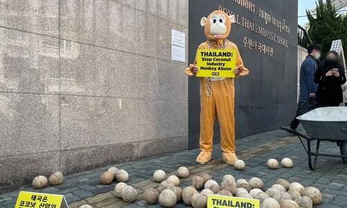 주한 태국대사관 앞에 '코코넛 무더기'가 버려진 이유