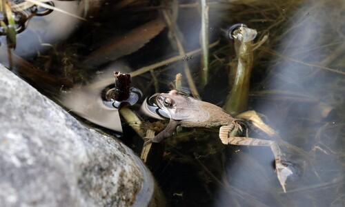 경칩, 겨울잠 깬 개구리
