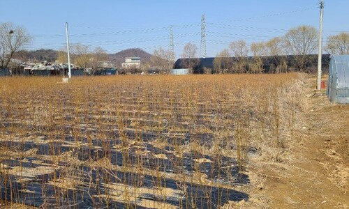 벼·고구마에 주말농장…LH 직원들의 '무늬만 농사' 행태