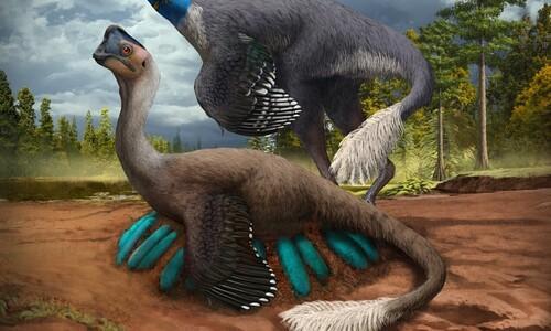 공룡이 새처럼 알을 품고 돌본 첫 증거가 나왔다