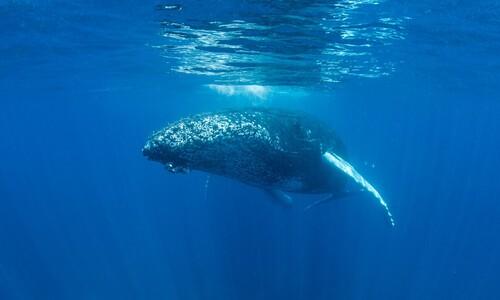 서서, 떠서, 누워…고래는 물속에서 어떻게 잘까