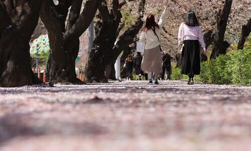 한·미·일 벚꽃 빨리 핀 이유 있었네…3월 지구 기온 역대 8번째