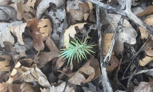 식물도 소음 피해받는다, 조용해진 뒤까지