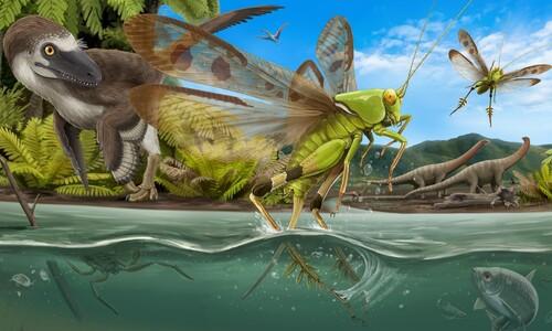 1억년 전 한반도 메뚜기, 물 박차고 날아올랐다