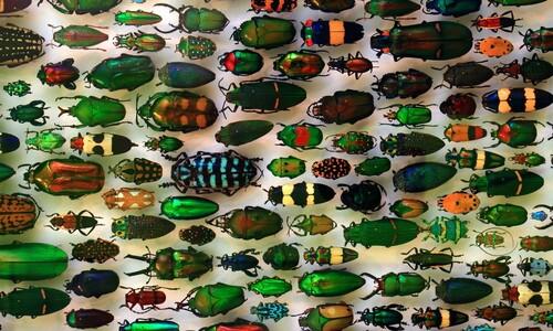 인공림에 사는 딱정벌레 종, 자연림의 3분의 1에 그쳐