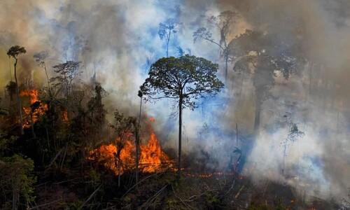 브라질 아마존, 지구 허파에서 CO₂ 굴뚝으로 변하다