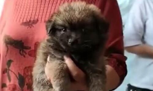 개, 고양이를 택배로…중국 '펫 랜덤박스' 열풍에 분노