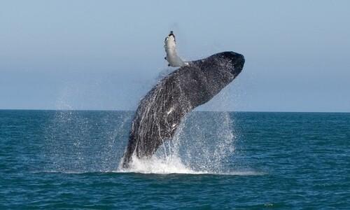 좌초·표류된 고래 유통만 금지하면 고래가 보호될까요?
