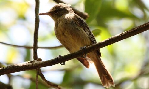 최초 공개, 지구촌 '새 인구'…500억 중 5마리 뿐인 이 새는?