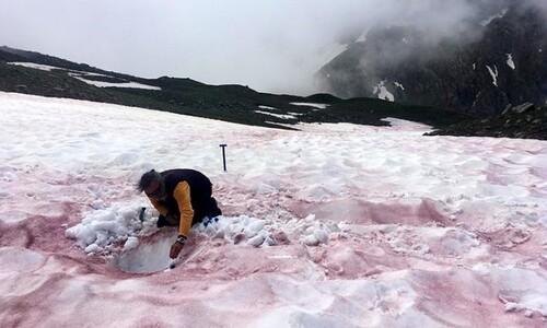 알프스 산꼭대기에서 일어나는 '적조 현상'도 기후변화 때문?
