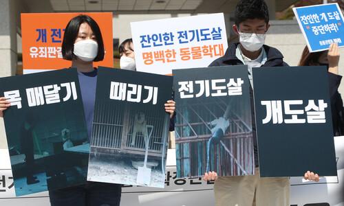 """""""개 전기도살은 동물보호법 위반""""…대법, 유죄 확정"""