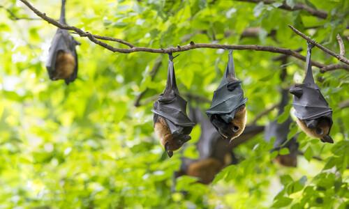 코로나는, 박쥐 따위는 왜 존재하는 걸까