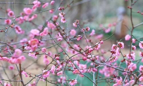 봄인 듯 포근한 날씨🌱…공기도 맑아 산책에 '딱'