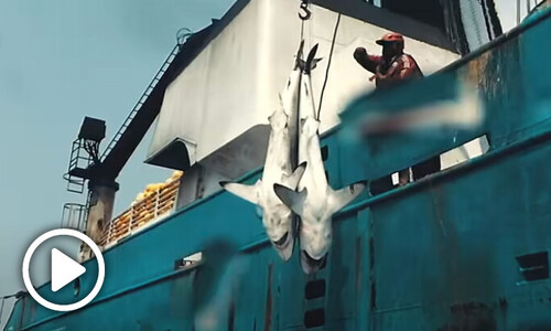 어업은 어떻게 고래를 멸종시키나…다큐 '씨스피라시'