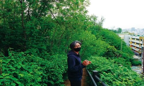 숲에서 베어지는 50살 아까시나무를 위한 변명