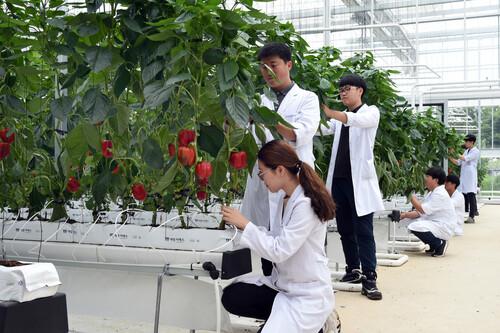 연암대학교 스마트원예계열 스마트팜 전공 학생들이 유리온실에서 실습하고 있다. 연암대 제공