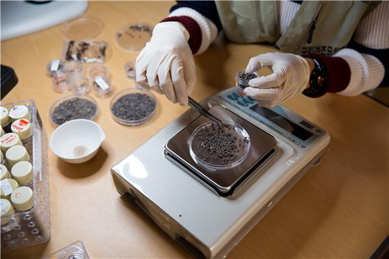 연구진이 경주 월성 해자 바닥의 흙을 물체질하는 과정에서 나온 여러 씨앗들을 분류하고 있다.