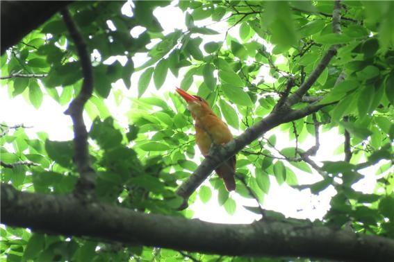 지난 6월 계룡산에서 촬영된 호반새 모습. 국립공원공단 제공