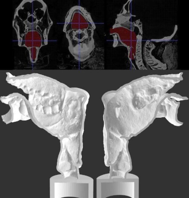 CT로 촬영한 미라의 성대(위)아 3D 프린팅으로 만든 인공 성대(아래). 사이언티픽 리포트