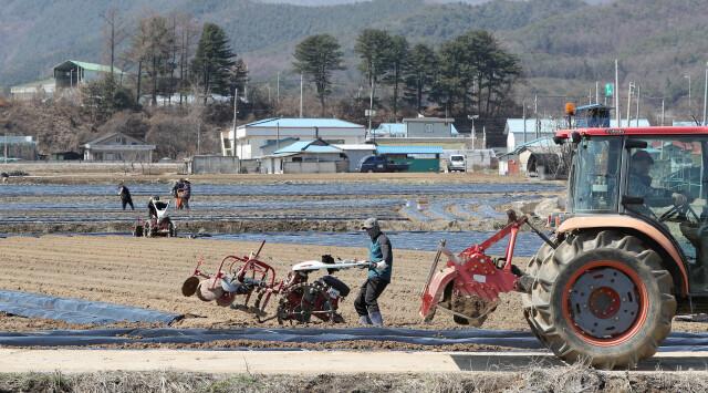 농촌기본소득이 지역순환경제를 활성화하는 데 어떤 역할을 할 수 있을지 탐색하는 논의가 이어지고 있다. 사진은 농촌의 한 감자밭에서 농민들이 씨감자를 심고 있는 모습이다. 연합뉴스