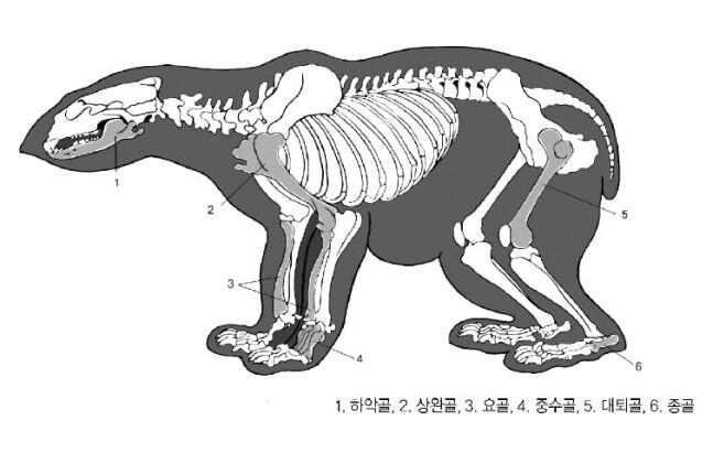 경주 월성에 출토된 곰 뼈들의 부위를 설명한 그림.