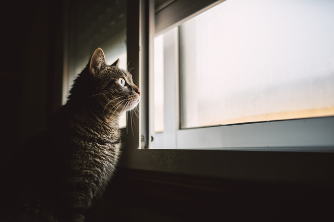 이틀 연속 '고양이 잔혹 살해'…50대 남성 법정구속