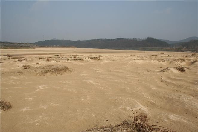 합강습지의 모래사막.