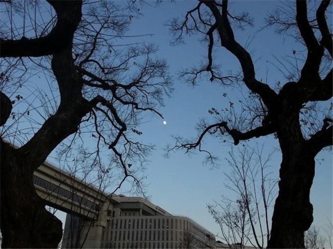 인공하천으로 변한 방축천에서 살아남은 버드나무 노거수 세 그루.