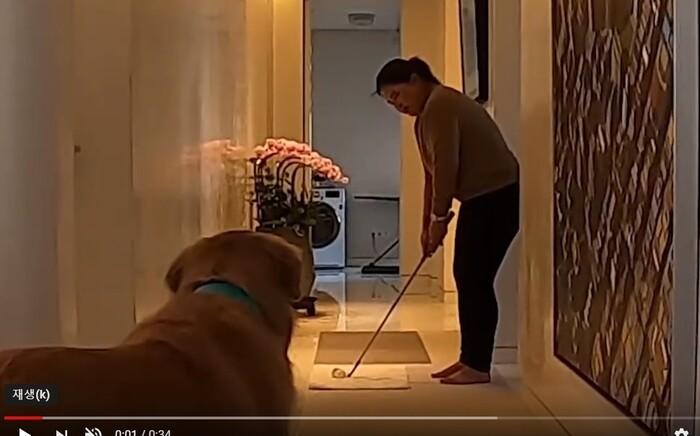 박인비, 집에서 하는 '방구석 챌린지' 동영상 공개