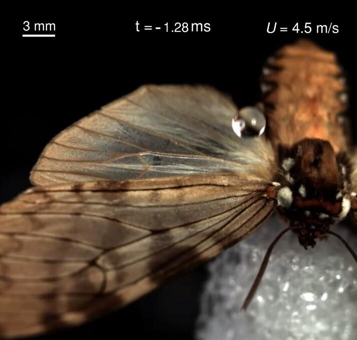 나비 날개에 빗방울이 떨어지는 순간. 김승호 외 (2020) 'PNAS' 제공