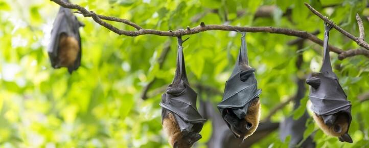 '코로나 탑재한 박쥐를 박멸하자'는 당신에게