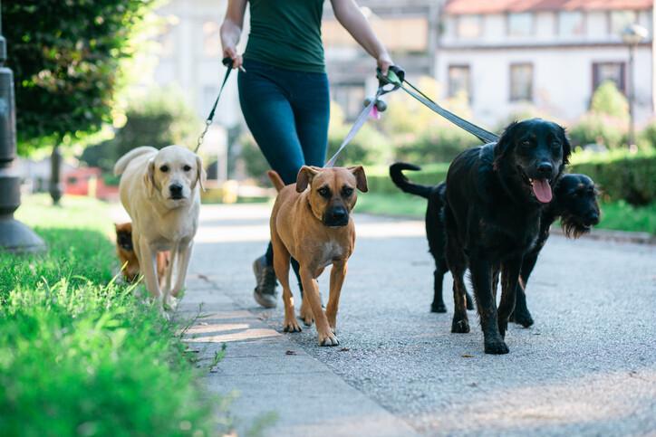 혹자는 보유세가 생기면 개를 갖다 버리겠다고 협박하는데, 그런 말을 하는 이들은 이미 개 키울 자격이 없다. 게티이미지뱅크