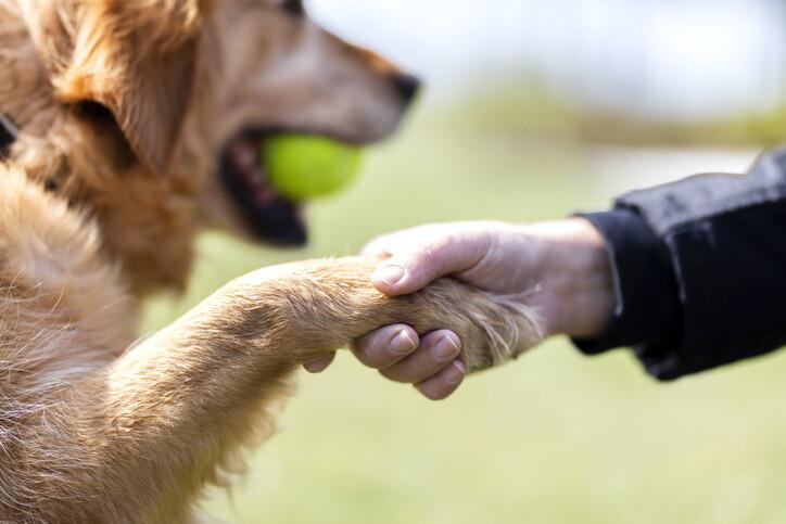 보유세 덕분에 개 등록제가 완성되며, 그 결과 동물학대가 줄어들 수 있다. 게티이미지뱅크