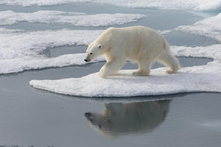 기후 변화, 환경 오염 등 자연 생태계 파괴에 의한 타격은 결국 인간에게 돌아온다. 게티이미지뱅크