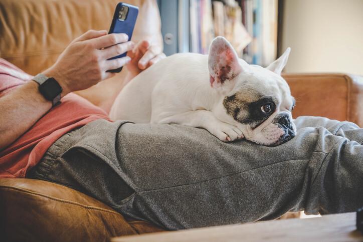 개는 스마트폰에 빠진 주인을 원망할까. 게티이미지뱅크