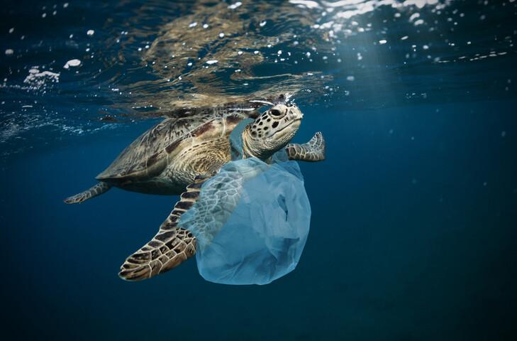 바다거북이 플라스틱 쓰레기를 먹고 죽는 이유는 해파리처럼 보여서가 아니라 먹이에서 나는 냄새가 나기 때문이란 연구결과가 나왔다. 게티이미지뱅크