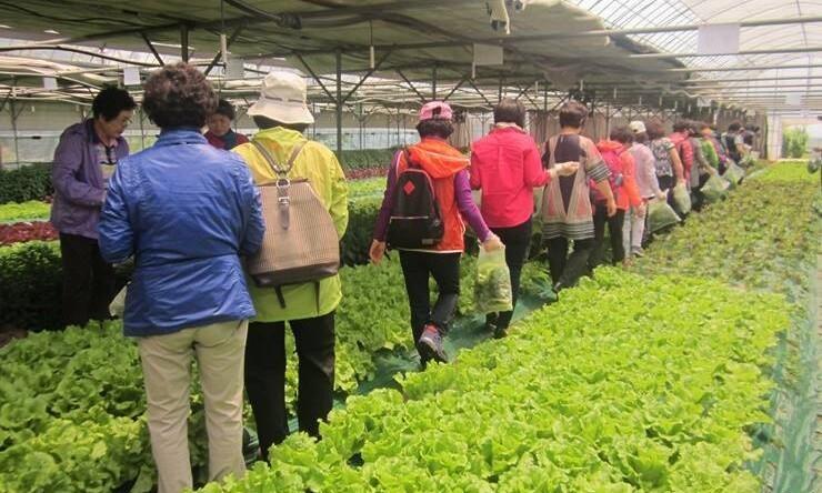 연 매출 100억 '상추 황제'의 몰락…농민들 연쇄 피해